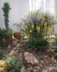 CChafer Kew1
